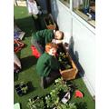 Planting flowers.