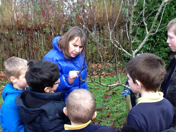 Miss Rimell showed us where the new buds will be.
