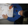 Designing a tiger hand puppet 2009-2010
