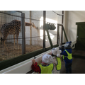 We found out that the giraffes like to eat hay.