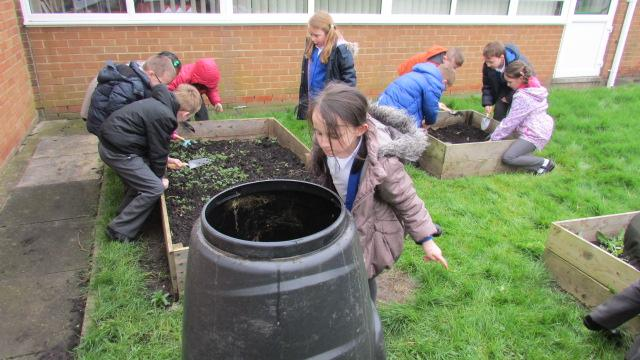 Year 2 children are weeding our planters.