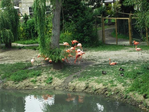 Please read our artical about Flamingo Land.
