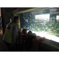 Year 1 Aquarium trip