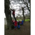 We've got the ladder Mr Hopper