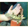 The gecko was very jumpy!