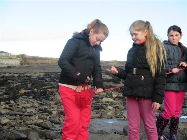 I think we found a langoustine.  No-one ate it.