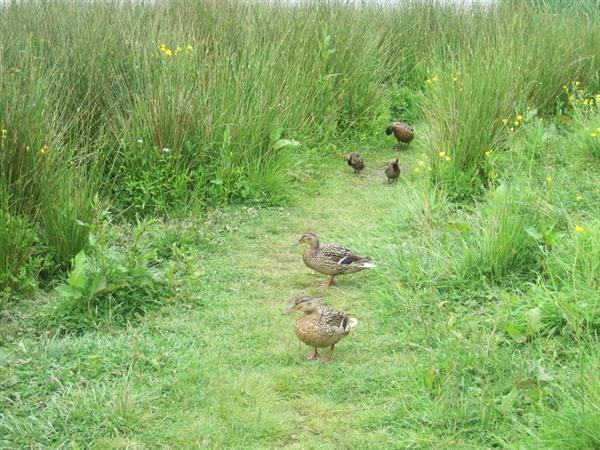 Thacka Beck Wildlife Walk CON