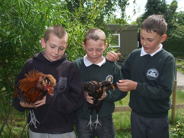These are our school chickens.