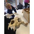 `Ice Age Bones