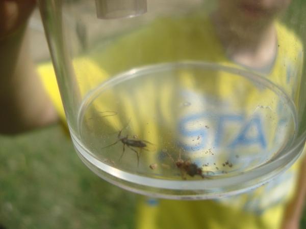 Bug bugs glorious bugs
