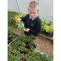 Looking after our plants in the polytunnel (