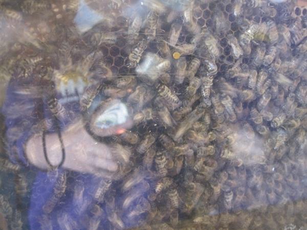 Rydal Beekeeping (Sept 2012)