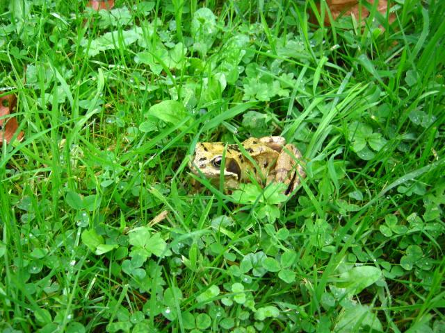 Toad is helping us out. He was well camouflaged.