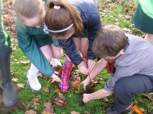 How many students does it take to plant a tree?