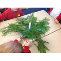 We used fir to make our Advent wreath.