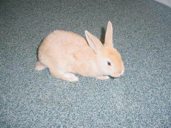 We have 2 new rabbits in F1, my name SeeSee