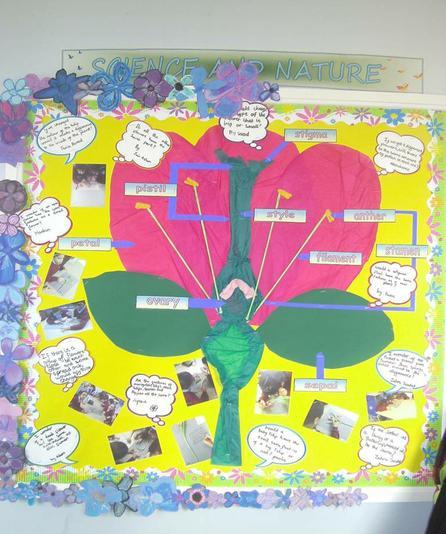 Year 5- Floral antatomy