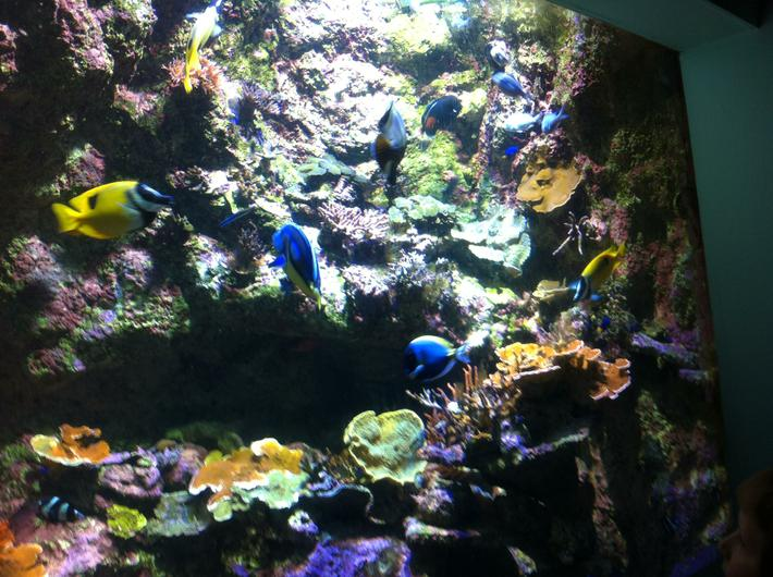 In the aquarium we saw lots of colourful fish.