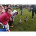 Meeting the cute penguins