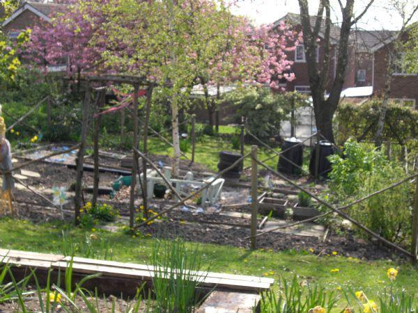 Our Allotments