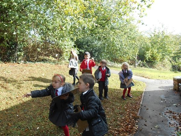 Our bird hunt