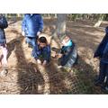 Creating a minotaur trap