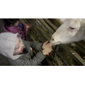 The goats liked us feeding them