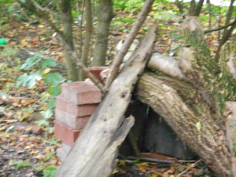 Part of a hedgehog's house.