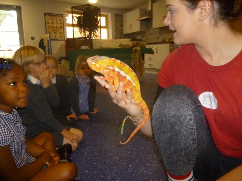 Then we learnt about the cameleon.