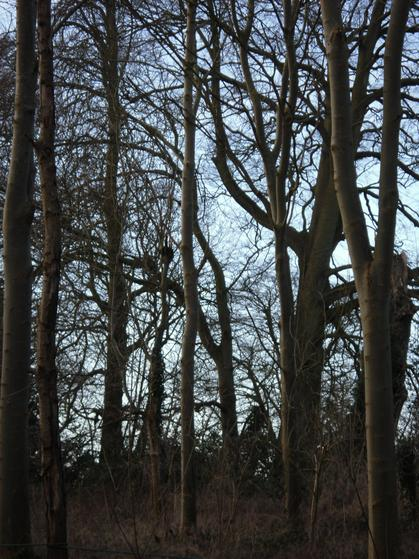Two bird nests in these trees, not quite in shot!