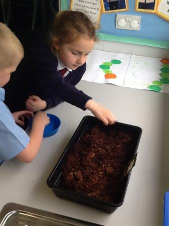 Planting some cress seeds!