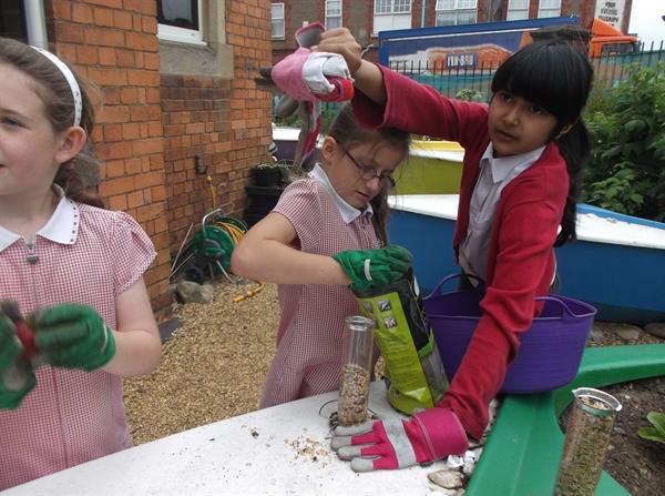 Gardening Club harvesting their crops!!