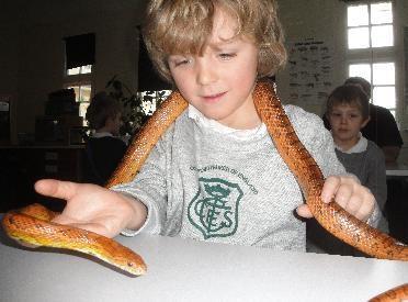 It's a snake!