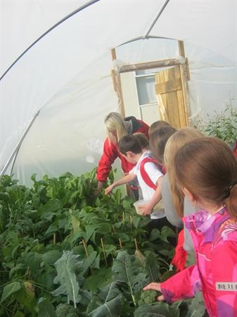 Cookery Club found vegetables for their salad