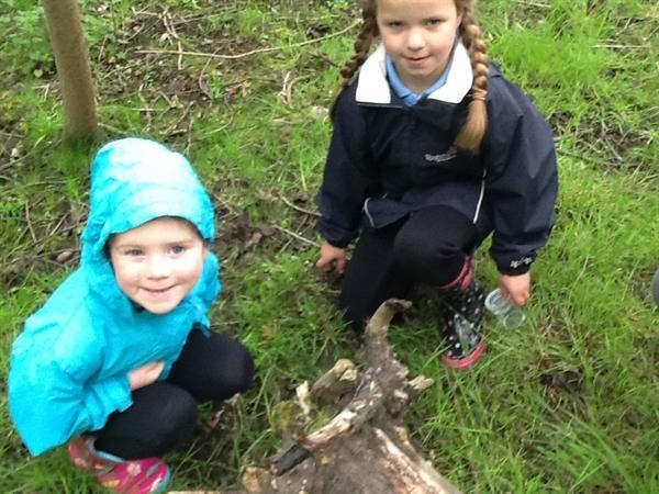 We found a chrysalis!!
