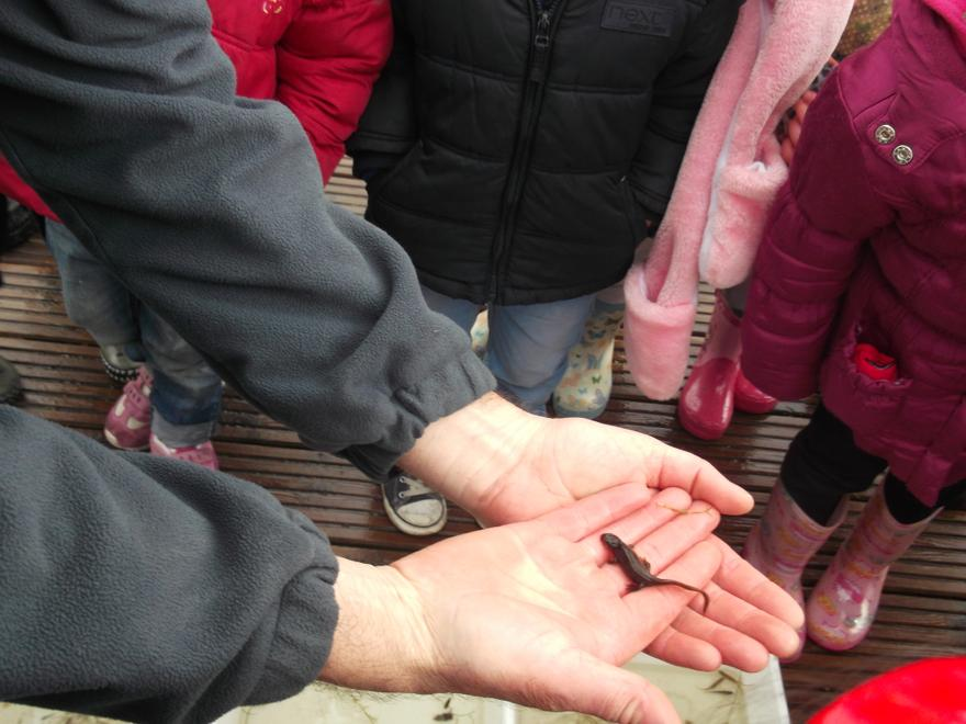 A newt!
