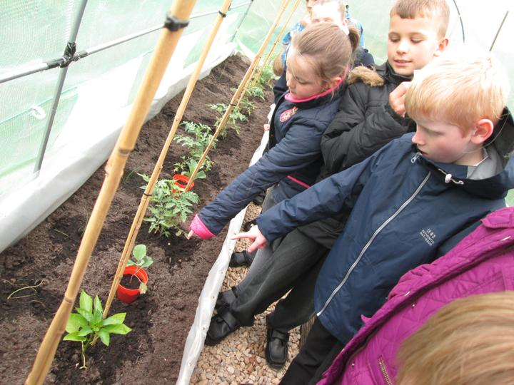 The children enjoying the experience and seeing how the chili peppers grow.