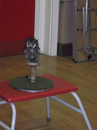 Our Birds of Prey display