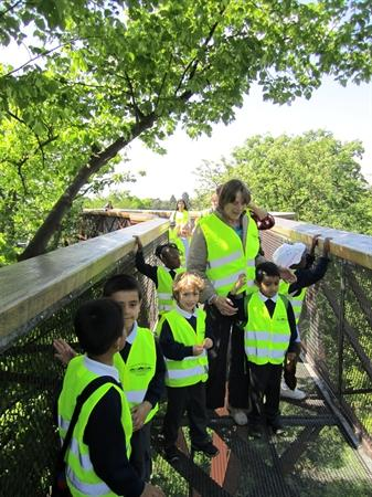 At the top of the treetop walkway.