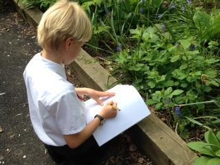 Wildlife Sketching